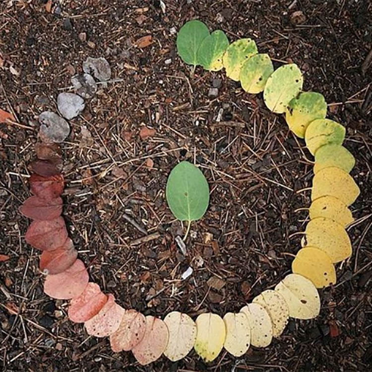 circle-of-life-leaves-750px